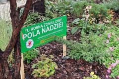 Pola-Nadziei-4